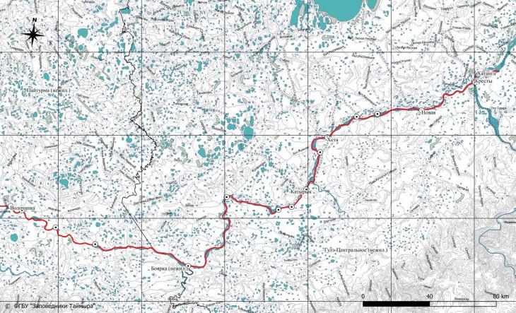 Район проведения полевых работ по изучению диких северных оленей таймырской популяции и установке спутниковых ошейников в 2020 году красной линией обозначен маршрут